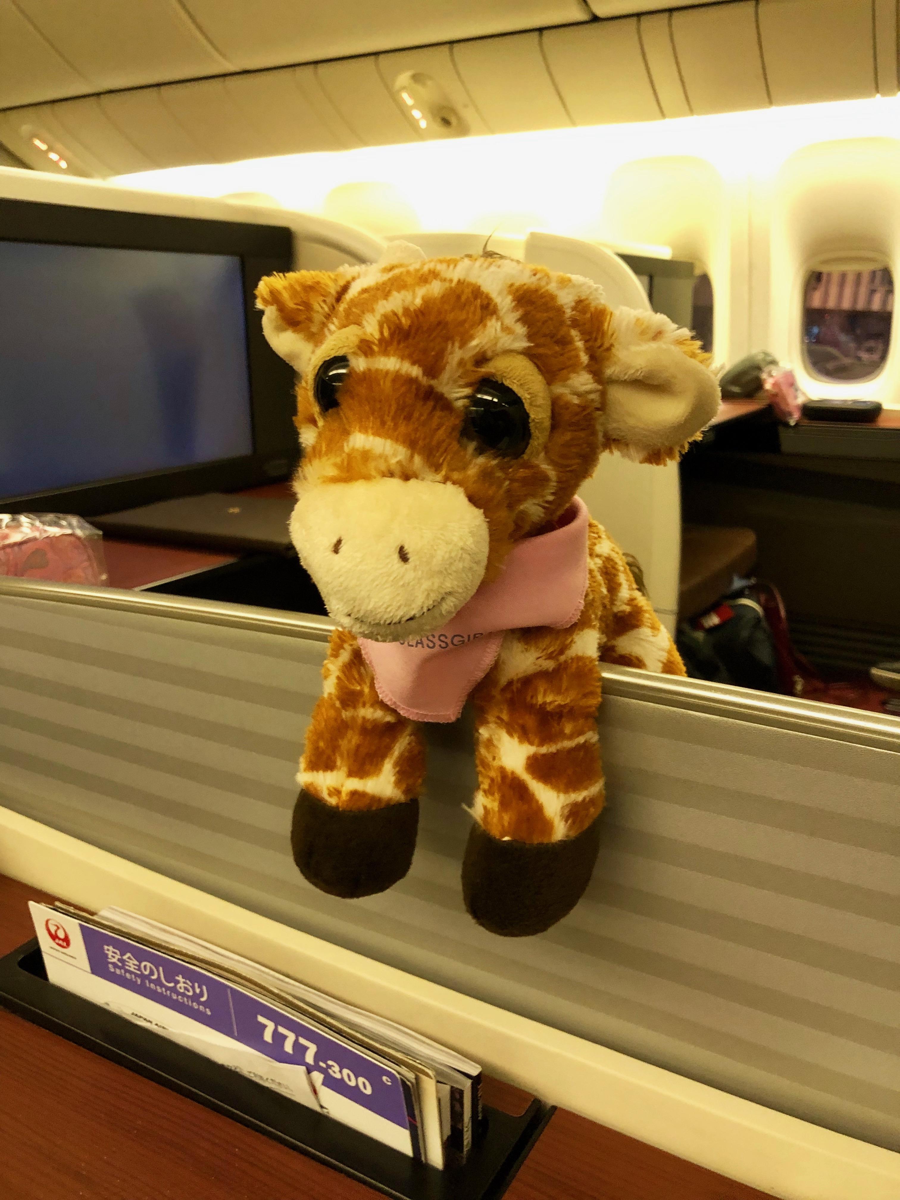 First Class Giraffe in JAL First Class