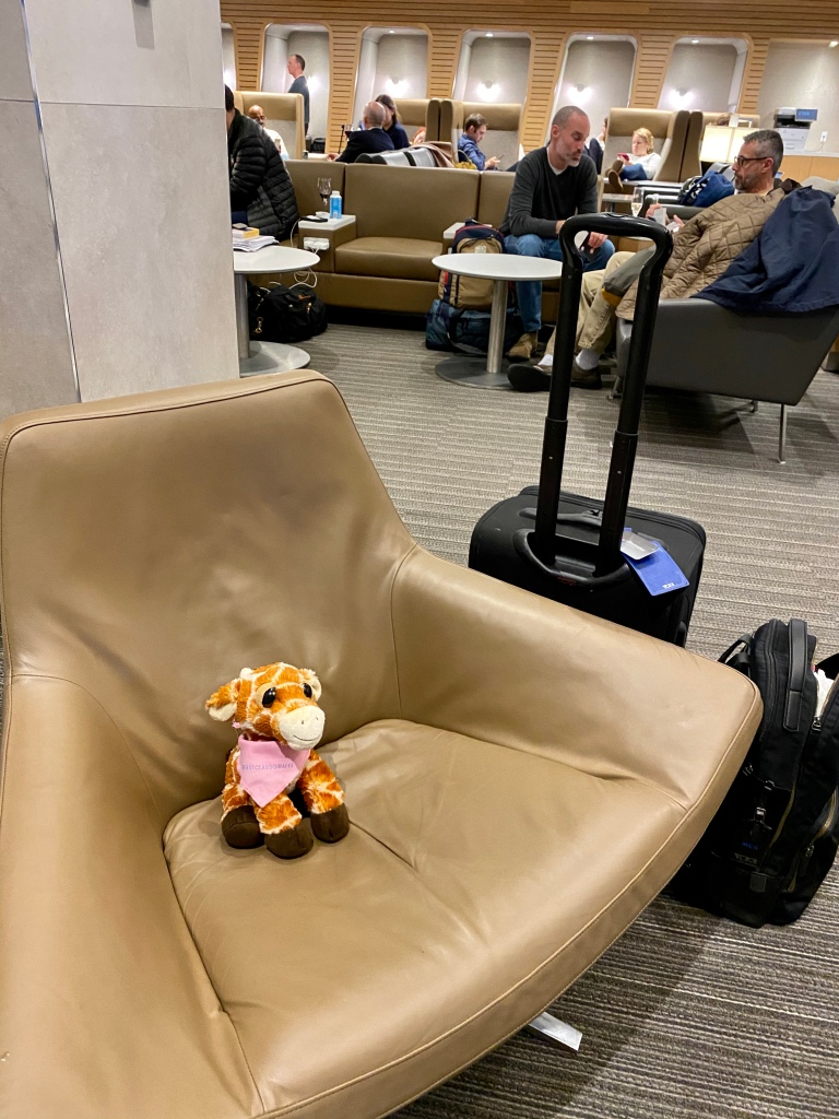 First Class Giraffe lounging pre-flight