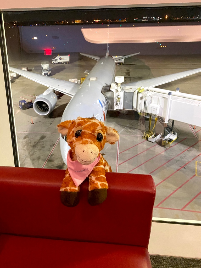 First Class Giraffe relaxing in the DFW Flagship Lounge