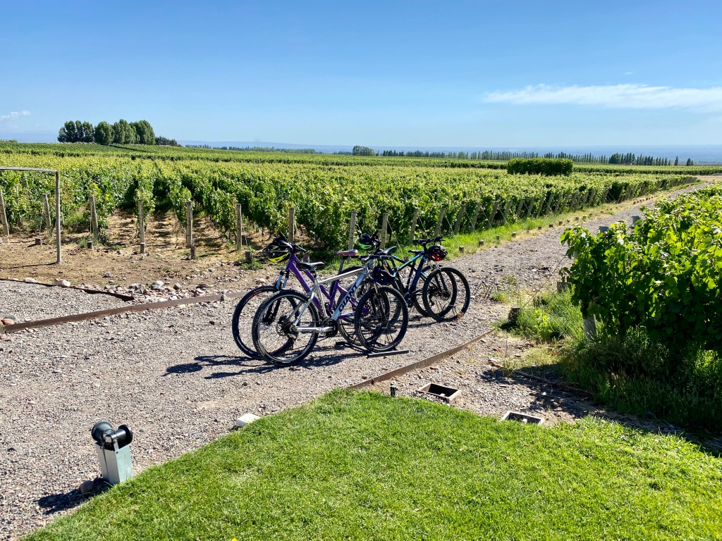 Bicycles in the vineyard