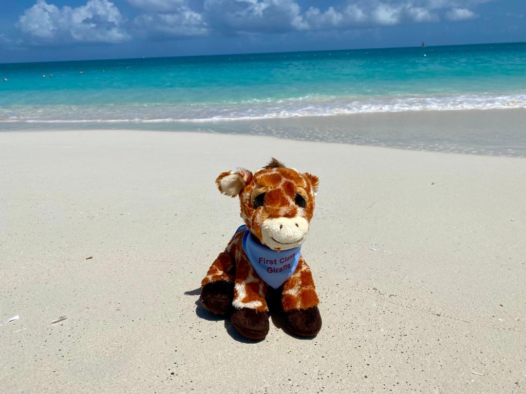 First Class Giraffe on Grace Bay Beach